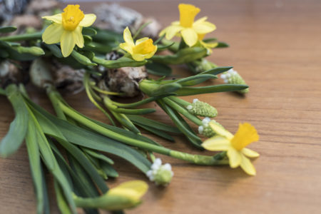 påskliljor och pärlhyacinter