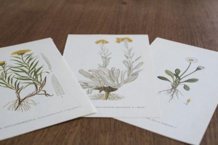 Nordens flora böcker