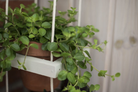 ampel med peperomia
